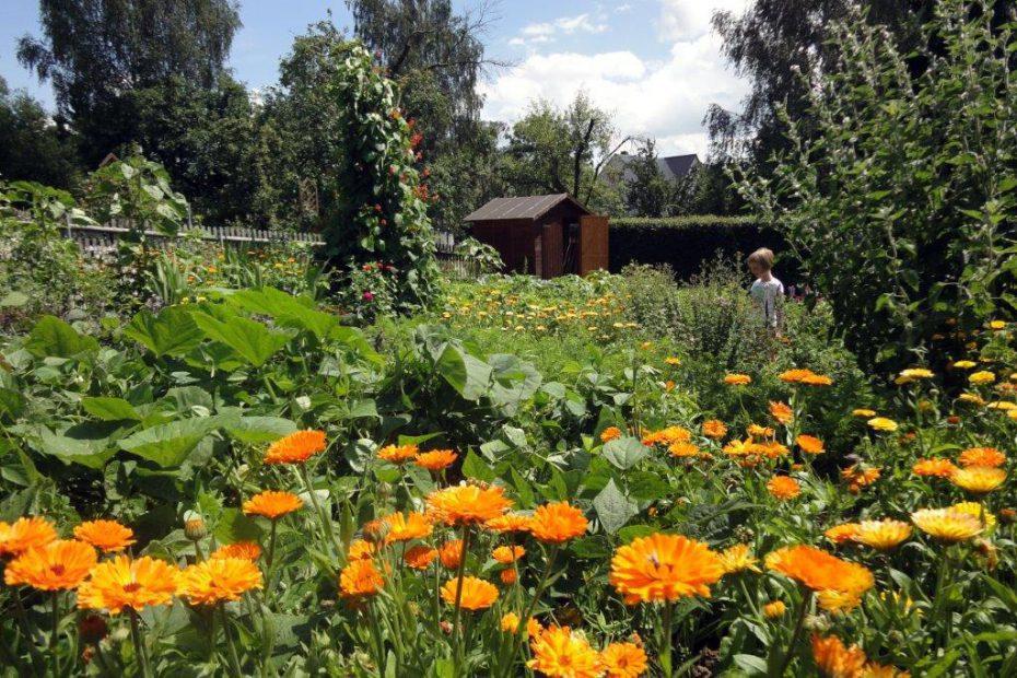 Der Schulgarten der Evangelischen Grundschule Seelitz.